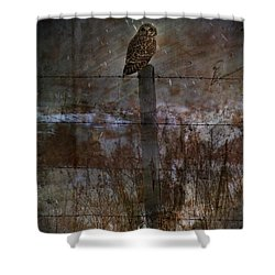 Short Eared Owl Shower Curtain by Empty Wall