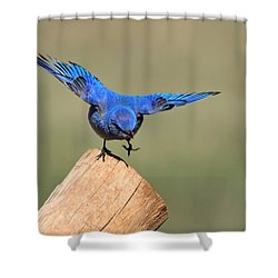 Showing Off Shower Curtain by Shane Bechler