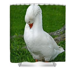 Shower Curtain featuring the photograph Shy Goose by Lisa Phillips