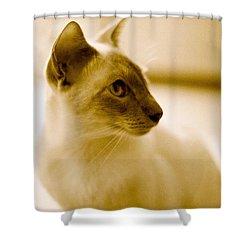 Siamese Feline Shower Curtain