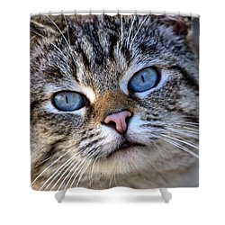 Shower Curtain featuring the photograph Siamese Feral Cat by Chriss Pagani