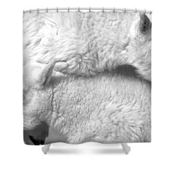 Sibling Love Shower Curtain by Colleen Coccia