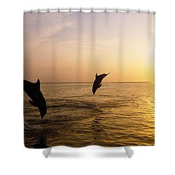 Silhouette Of Bottlenose Dolphins Shower Curtain by Natural Selection Craig Tuttle