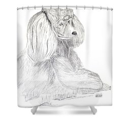 Shower Curtain featuring the drawing Silver Poodle by Maria Urso