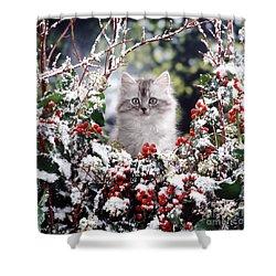 Silver Tabby Kitten Shower Curtain by Jane Burton