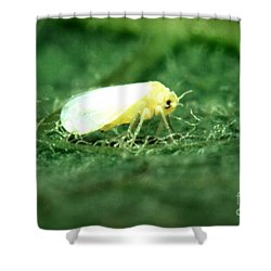 Silverleaf Whitefly Shower Curtain by Science Source