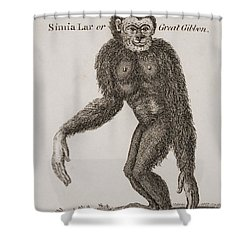 Simia Lar, Great Gibbon. Engraved By Shower Curtain by Ken Welsh