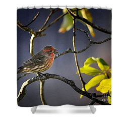 Shower Curtain featuring the photograph Singing In The Morning by Nava Thompson