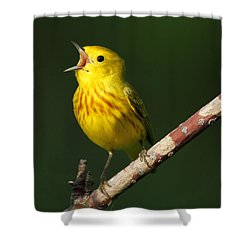 Singing Yellow Warbler Shower Curtain by Doug Lloyd