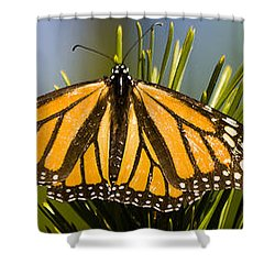Single Monarch Butterfly Shower Curtain by Darcy Michaelchuk