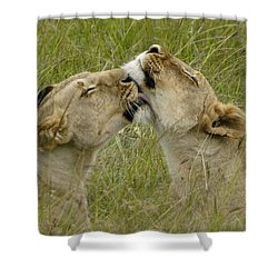 Sisterly Love Shower Curtain by Michele Burgess