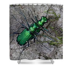 Six-spotted Tiger Beetles Copulating Shower Curtain