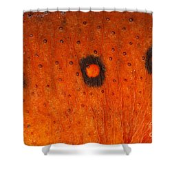 Skin Of Eastern Newt Shower Curtain by Ted Kinsman