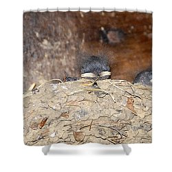 Sleeping Barn Swallows Shower Curtain by David Lee Thompson