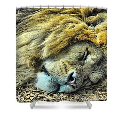 Sleeping Lion Shower Curtain by Chris Thaxter