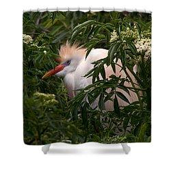Sleepy Egret In Elderberry Shower Curtain