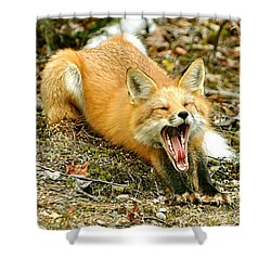 Shower Curtain featuring the photograph Sleepy Fox by Rick Frost