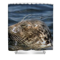 Sleepy Seal Shower Curtain by Rick Frost