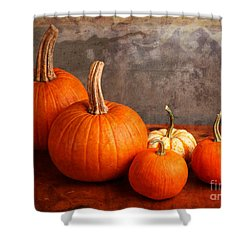 Small Decorative Pumpkins Shower Curtain by Verena Matthew