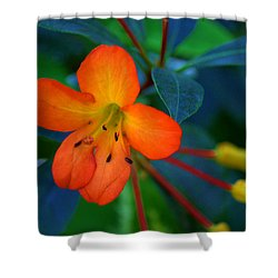 Shower Curtain featuring the photograph Small Orange Flower by Tikvah's Hope
