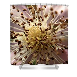 Small Seeds Shower Curtain