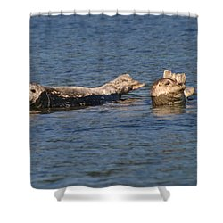 Smiling Seals Of Puget Sound Shower Curtain by Kym Backland