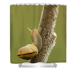 Snail In Dew Shower Curtain by Mircea Costina Photography