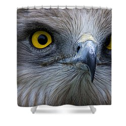 Snake Eagle 2 Shower Curtain by Heiko Koehrer-Wagner