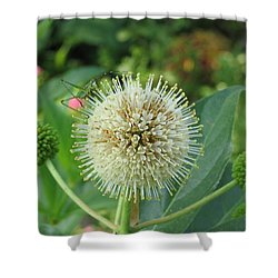 Snakeroot Rider Shower Curtain by Mark Robbins