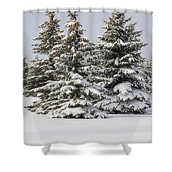 Snow Covered Evergreen Trees Calgary Shower Curtain by Michael Interisano