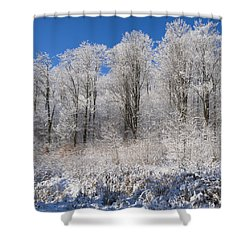 Snow Covered Maple Trees Iron Hill Shower Curtain by David Chapman