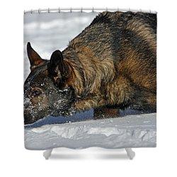 Snow Dog Shower Curtain by Karol Livote
