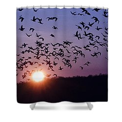 Snow Geese Migrating Shower Curtain