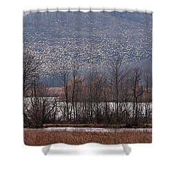 Snow Geese Rising Shower Curtain