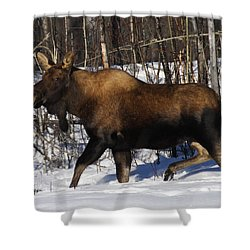 Shower Curtain featuring the photograph Snow Moose by Doug Lloyd