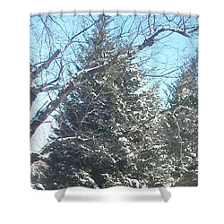 Shower Curtain featuring the photograph Snow Sprinkled Pine by Pamela Hyde Wilson