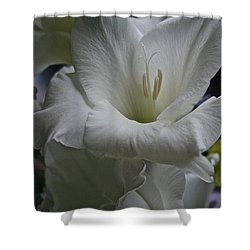 Snow White Glads Shower Curtain by Susan Herber