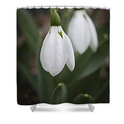 Snowdrop Purity Shower Curtain by Teresa Mucha