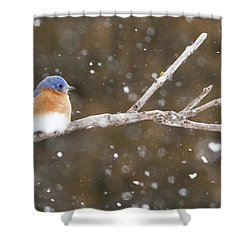 Snowy Bluebird Shower Curtain