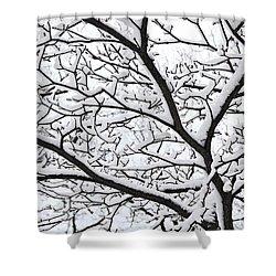 Snowy Branch Shower Curtain by Elena Elisseeva