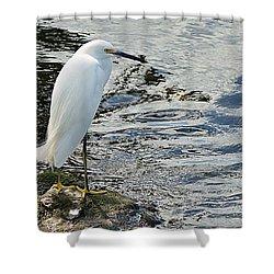 Snowy Egret 2 Shower Curtain by Joe Faherty
