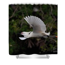 Snowy Egret In Flight Shower Curtain by Art Whitton