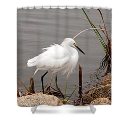 Snowy Egret Shower Curtain by Kay Lovingood