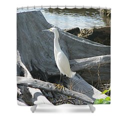 Shower Curtain featuring the photograph Snowy Egret by Laurel Best