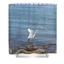 Shower Curtain featuring the photograph Snowy Egret by Marilyn Wilson