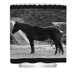 Snowy Horse Shower Curtain