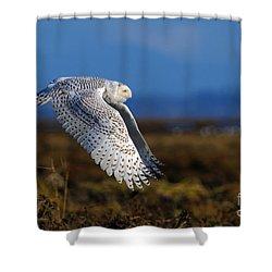 Snowy Owl 1b Shower Curtain by Sharon Talson