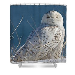 Snowy Owl Profile Shower Curtain