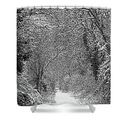 Snowy Path Shower Curtain by Linsey Williams