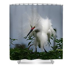 Snowy Stand Off Shower Curtain by Skip Willits